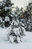 Fir tree under the snow Royalty Free Stock Photos