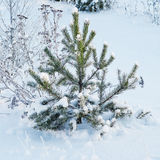 Fir tree under the snow Stock Images