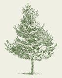 Fir tree. Vector drawing of a little fir tree Stock Image