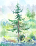 Fir-tree watercolor. Fir-tree,  watercolor painting. Hand drawn landscape painted on wet paper Stock Photos