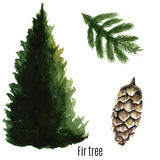 Fir tree. Fir tree watercolor. Vector illustration Stock Photography