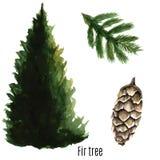 Fir tree. Stock Photography