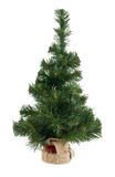 Fir-tree Royalty Free Stock Photography