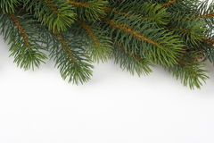 Fir tree - on white background christmas background Royalty Free Stock Images