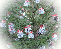 Fir tree with white cones stock photography