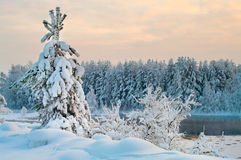Fir tree in winter forests Royalty Free Stock Photography