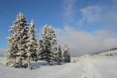 Fir tree in winter, Jura mountain, Switzerland Stock Photos