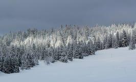 Fir tree in winter, Jura mountain, Switzerland Royalty Free Stock Photos