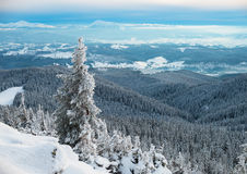 Fir tree in winter mountains Stock Photos