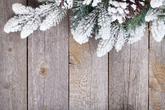 Fir tree on wooden board Royalty Free Stock Photography