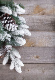 Fir tree on wooden board Stock Image