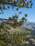 Fir tree in Yosemite Park Royalty Free Stock Photo