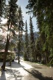 Fir trees. At lake louise Stock Images