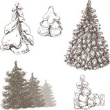 Fir-trees. Different fir-trees. Vector illustration Stock Image