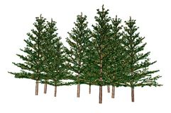 Fir Trees. Group of fir trees on white background stock illustration