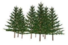 Fir Trees stock illustration