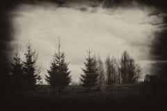 Fir-trees Στοκ Εικόνες