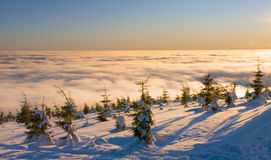 Fir trees above the clouds Royalty Free Stock Photo