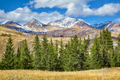 Fir trees in Altay Stock Images
