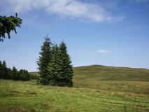 Fir trees. Beautiful meadow and mountain landscape Stock Images