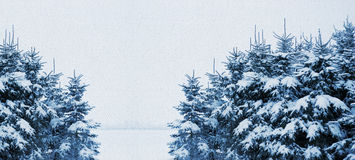 Fir trees on canvas structure Stock Photos