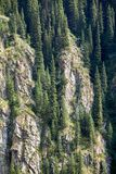 Fir trees on cliff rock Stock Photo