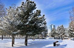 Fir trees covered with fresh snow on the background of urban landscape and blue winter sky on a Sunny morning stock image