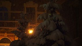 Fir-trees covered in snow on a background of the house during a snowfall. Snow-covered branches of trees during a heavy snow. Yellow light of street lamp stock video