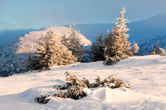 Fir trees covered with snow on background mountains and blue sky. Sunny weather. A winter landscape. Christmas  landscape Stock Photography