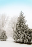 Fir trees covered with snow in the forest in thick fog Winter la Royalty Free Stock Photography