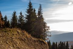 Fir trees at dusk in autumn. Mountains in the background. Sun on. The sky Stock Photos