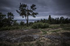 Fir-trees on the edge of the woods against stormy skies overlook lake and the city in the distance stock image