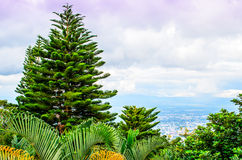 Fir trees and Ferns. Overlooking Ching Mai Royalty Free Stock Image