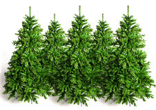 Fir trees. Five green fir trees for Christmas market Royalty Free Stock Image