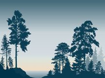 Fir trees forest on dark cyan background. Illustration with fir trees forest on dark cyan background Stock Photography
