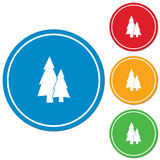 Fir Trees forest. Flat icon Stock Image