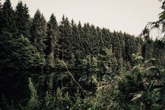 Fir trees in a forest next to a lake stock images