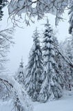 Fir trees fully covered by snow in winter forest royalty free stock images