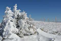 Fir trees, googles, snow and pillars Royalty Free Stock Photo