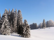 Jura Mountain in Winter, mont d or area. Fir trees, Jura Mountain in Winter, mont d or area Royalty Free Stock Images