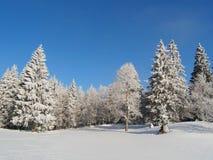 Jura Mountain in Winter, mont d or area. Fir trees, Jura Mountain in Winter, mont d or area Stock Image