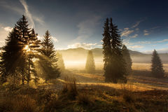 Fir trees on meadow between hillsides with conifer forest in fog Royalty Free Stock Photos