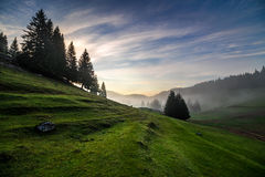 Fir trees on meadow between hillsides in fog before sunrise Stock Images