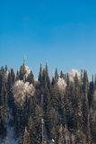 Fir trees on the mountain Royalty Free Stock Images