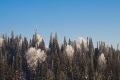 Fir trees on the mountain Royalty Free Stock Photography