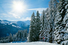 Fir trees on a mountain slope Royalty Free Stock Photos