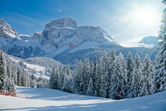 Fir trees on a mountain slope royalty free stock photography