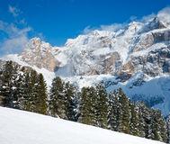 Fir trees on a mountain slope. At Dolomites in Italy Stock Photo