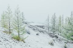Fir trees in the mountain valley. Under the first snow stock images