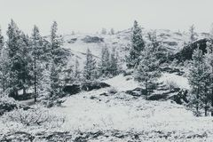 Fir trees in the mountain valley under snow. Fir trees in the mountain valley under the first snow stock photography